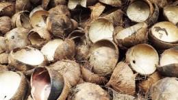 choconut shell